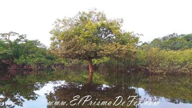 Bosque Inundado de Cuyabeno