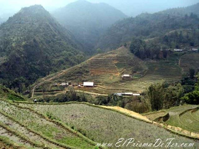 Paisajes de arrozales en Sapa