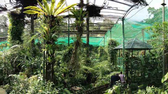 Parque de Mariposas de Kuala Lumpur - Foto por Gryffindor