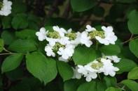 Flores Blancas, Yacanto, Calamuchita, Córdoba, Argentina