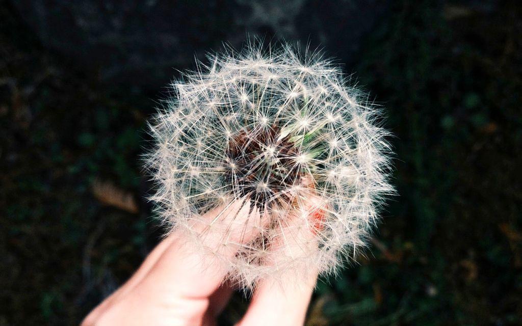 Per què serveixen les emocions?