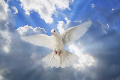 espiritu santo, paloma blanca, cielo, espíritu