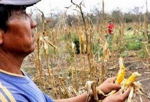 campesinos mayas