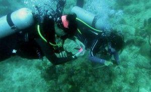 estudios marinos
