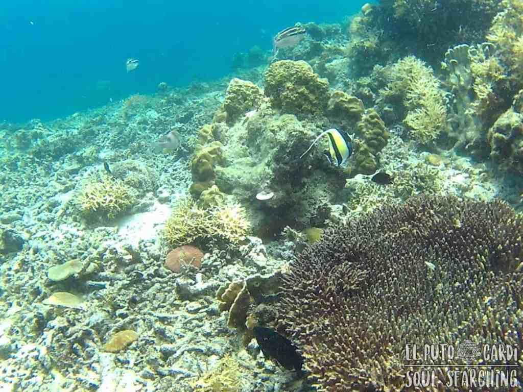 El Nido Island hopping: Best snorkeling in Philippines