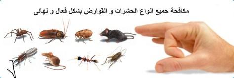 شركة مكافحة حشرات بجازان