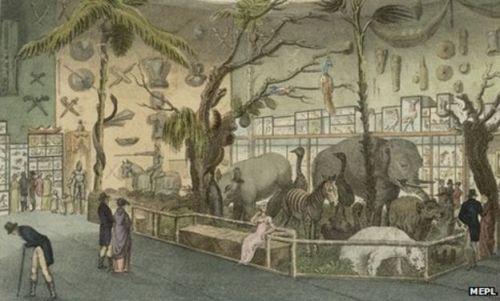 El Museo de W. Bullock en Liverpool [Imagen de BBC.co]