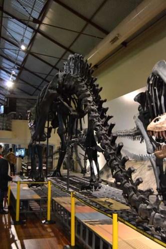 exposición permanente del MNCN bajo el título Minerales, Fósiles y Evolución Humana