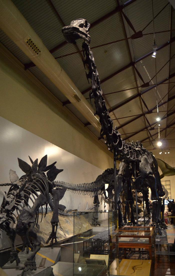 Algunos de los fósiles expuestos en el Museo Nacional de Ciencias Naturales [Foto de Jesús C.V. @JCV_02 ]