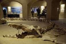 El fósil más grande Basulosaurus