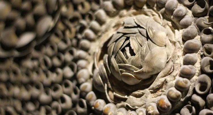 gruta conchas