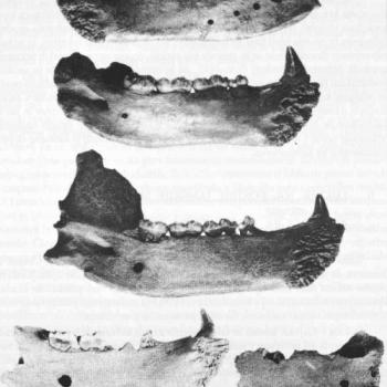 instrumentos prehistoricos