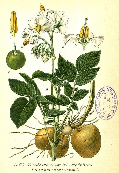 noticia plantas