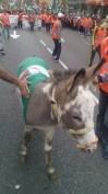 22M_burro_Getafe