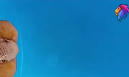 UN VIDEO QUE CIRCULA EN LA RED MUESTRA COMO UN ELEFANTE PATEA UN IPHONE QUE SE ENCONTRABA ACTIVO GRABANDO, AL PARECER LE GUSTABA MÁS EL ANDROID