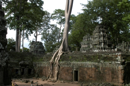 Temple with strangler figs trees and roots at Ta Prohm