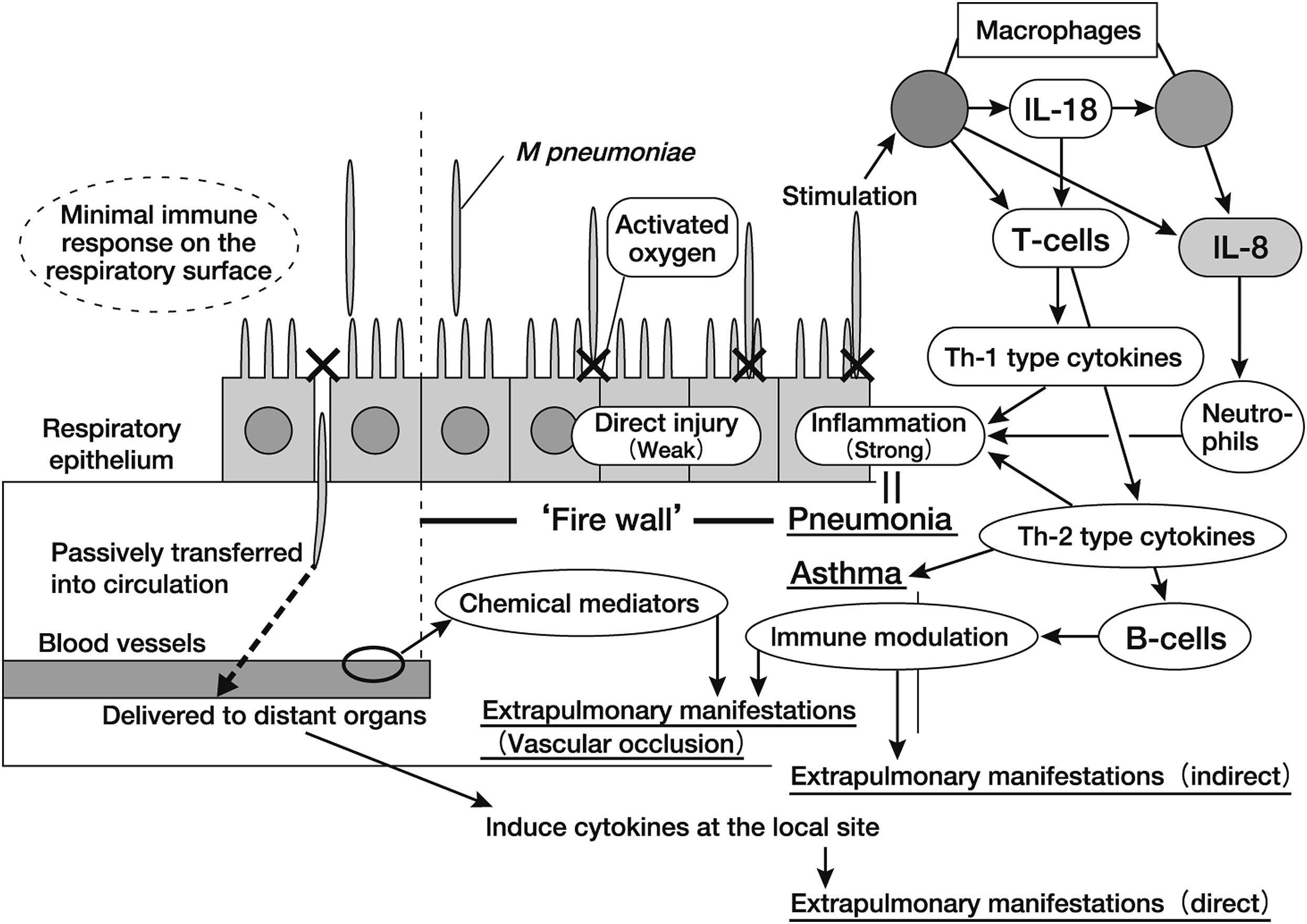 Pathogenesis Of Neurologic Manifestations Of Mycoplasma