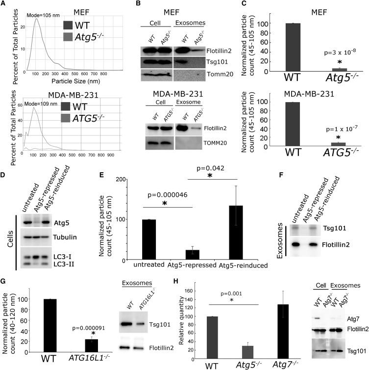 Atg5 Disassociates the V1V0-ATPase to Promote Exosome