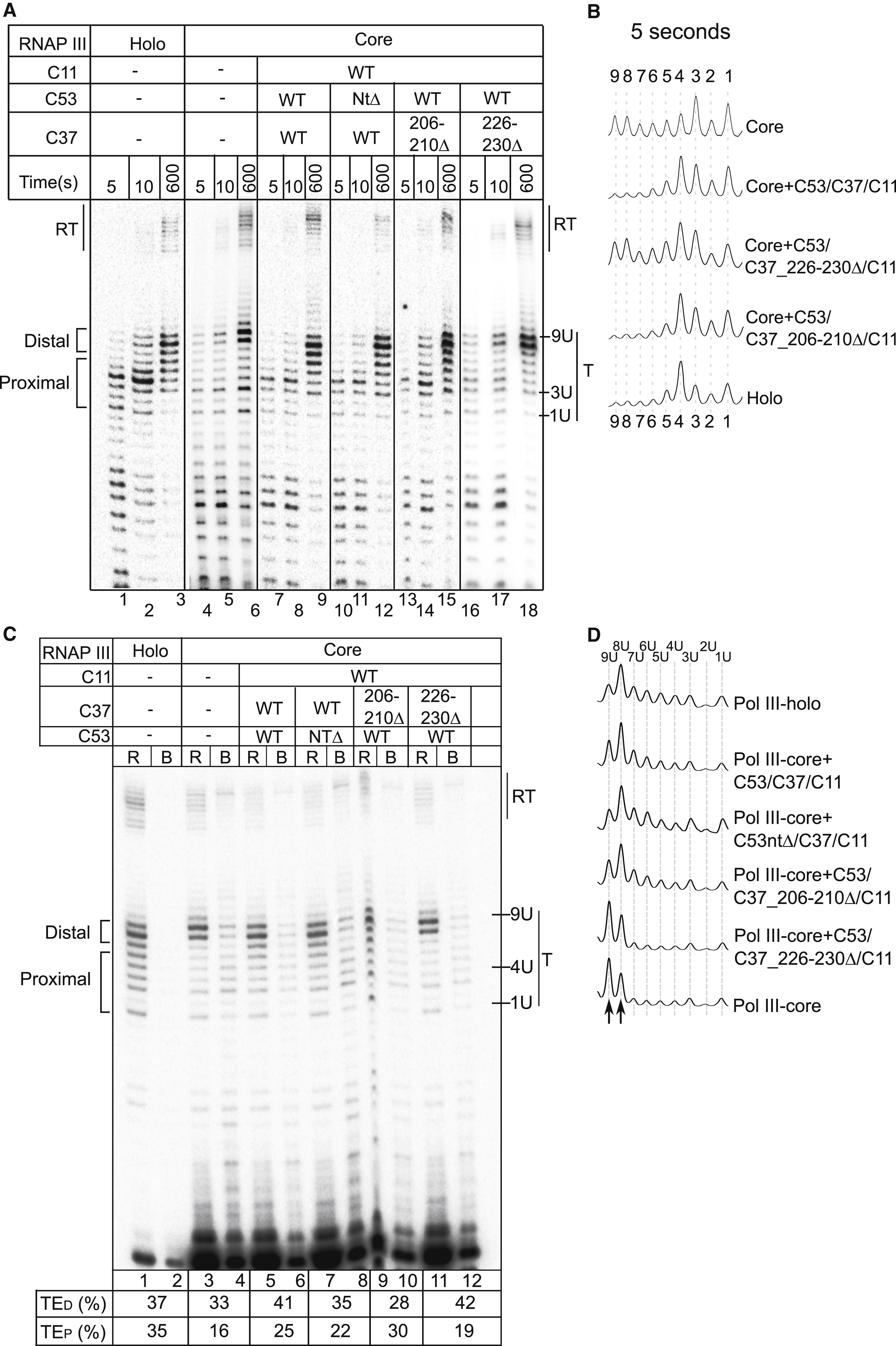 Mechanism Of Transcription Termination By Rna Polymerase