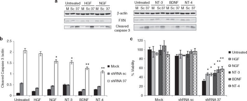 Gene Transfer of Brain-derived Neurotrophic Factor (BDNF
