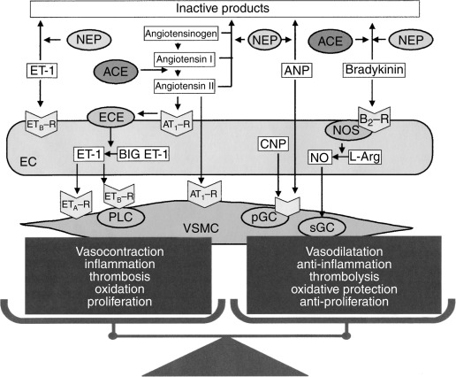 Vasopeptidase inhibition: A new treatment approach for ...
