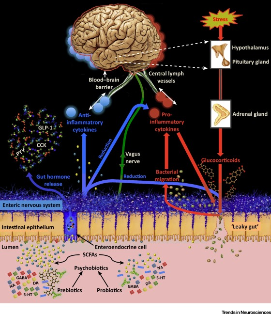 Psychobiotics and the Manipulation of Bacteria–Gut–Brain Signals: Trends in Neurosciences