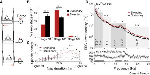 Rocking synchronizes brain waves during a short nap