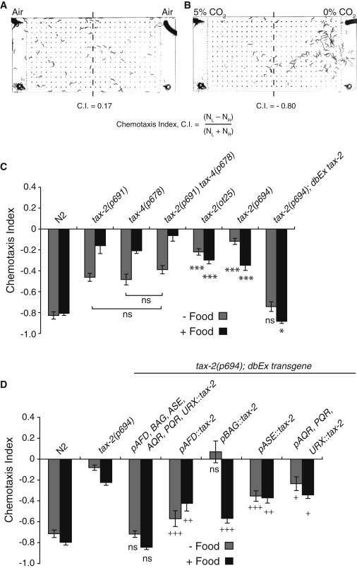 Temperature, Oxygen, and Salt-Sensing Neurons in C