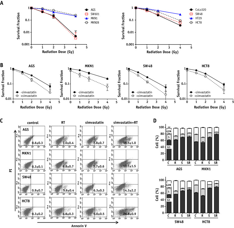 Synergistic Effect of Simvastatin Plus Radiation in