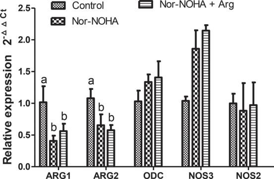 Inhibition of arginase via jugular infusion of Nω-hydroxy