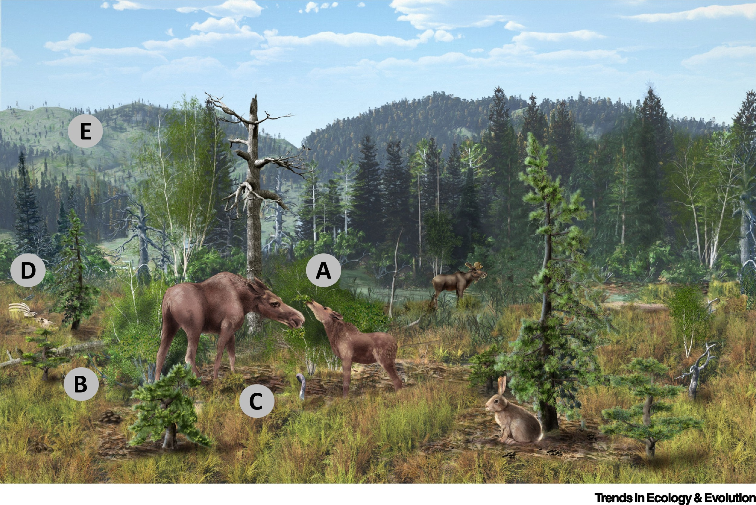 The tick will drink the blood of the lion, and possibly give it disease. Herbivore Impacts On Carbon Cycling In Boreal Forests Trends In Ecology Evolution