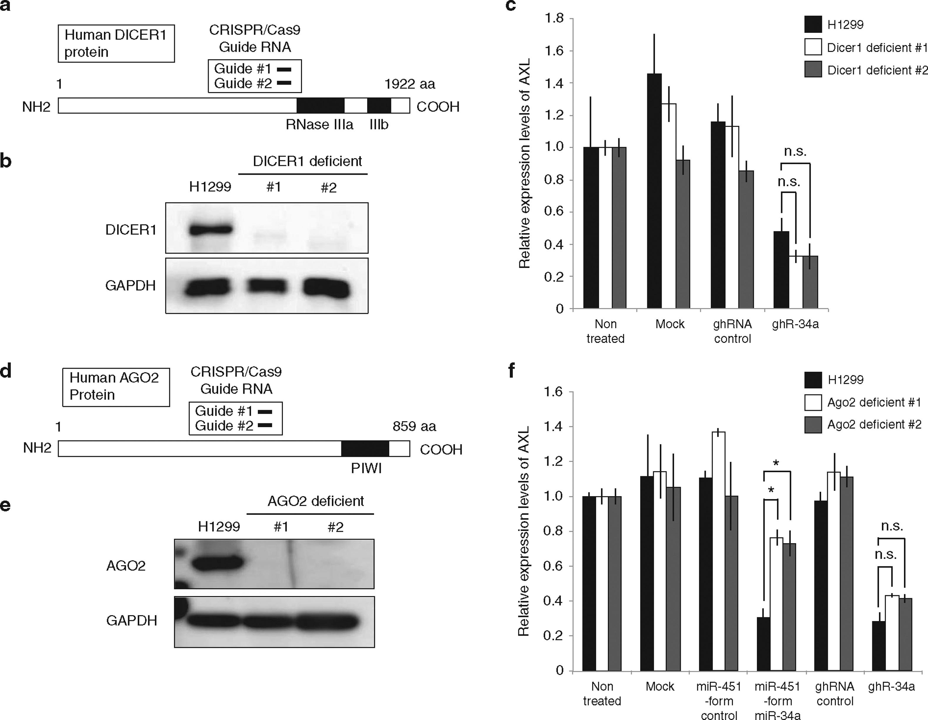 Development of Novel Small Hairpin RNAs That do not