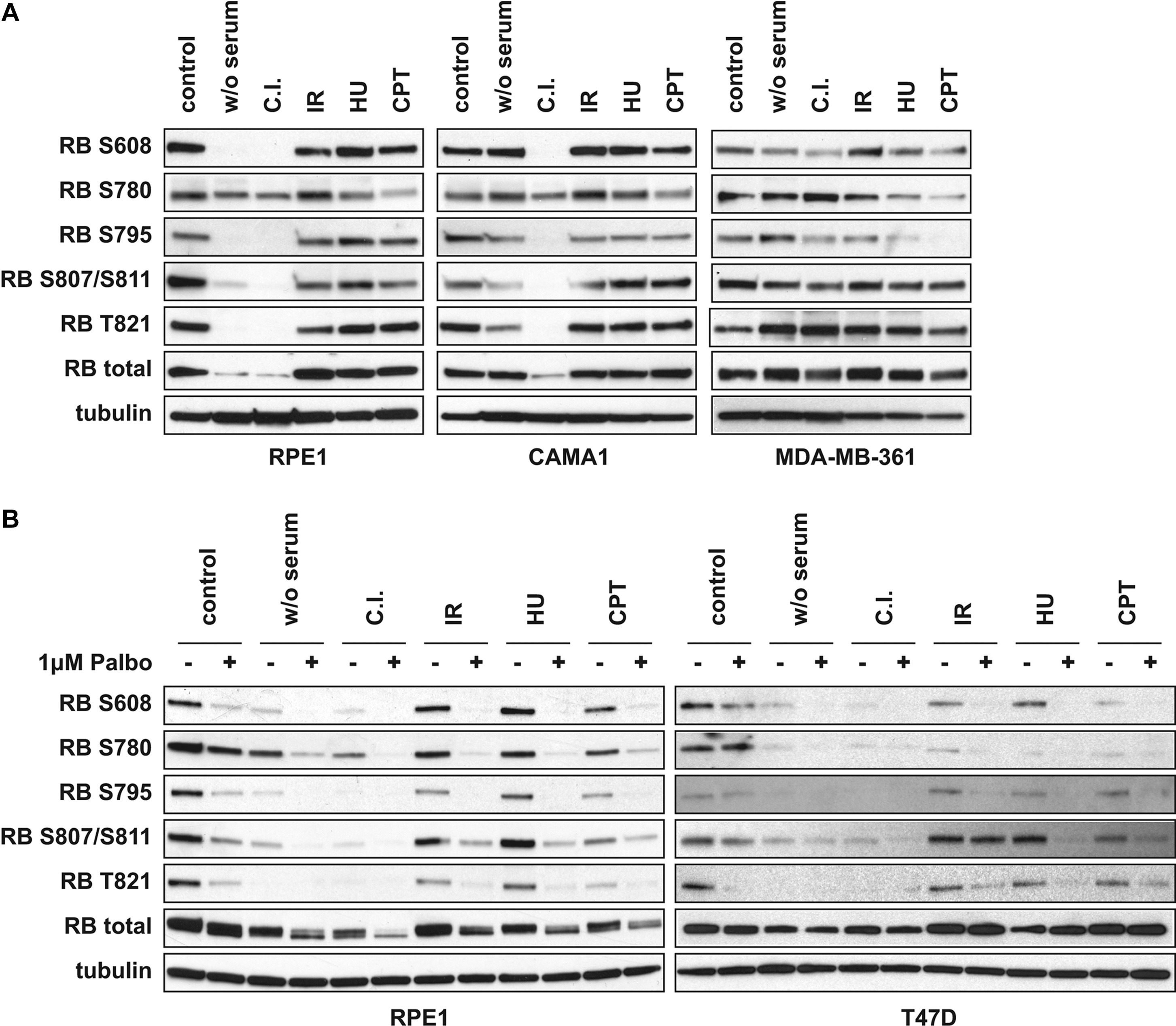 A Code of Mono-phosphorylation Modulates the Function of
