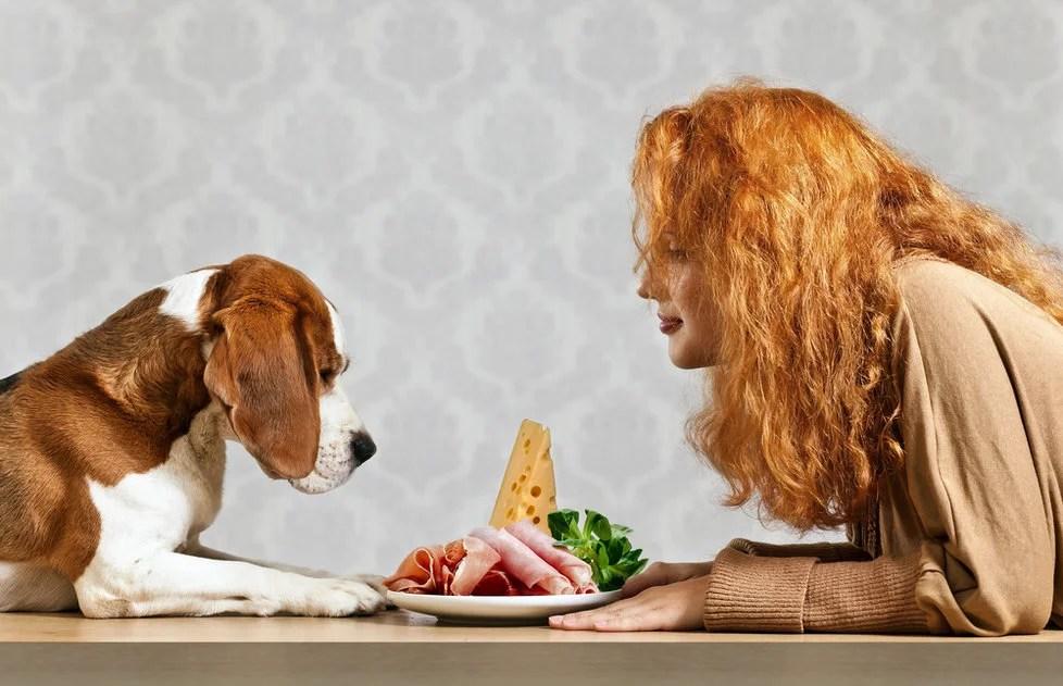 Alimentos que no debes dar a tus perros