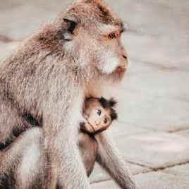 Elsa Cyril - Monkey forest 5