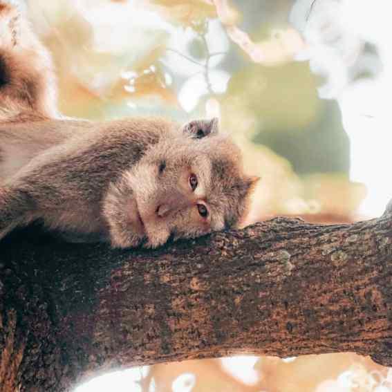 Elsa Cyril - Monkey forest