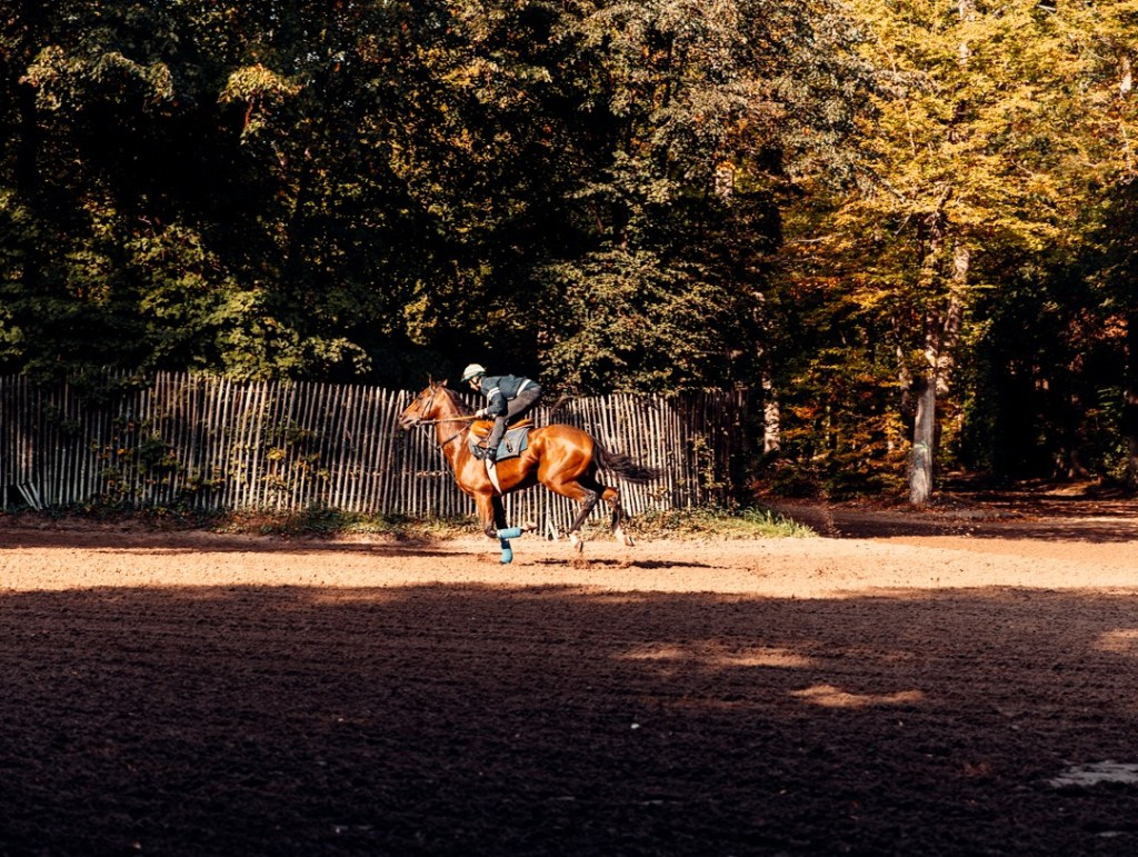 entrainements-chevaux-foret-chantilly