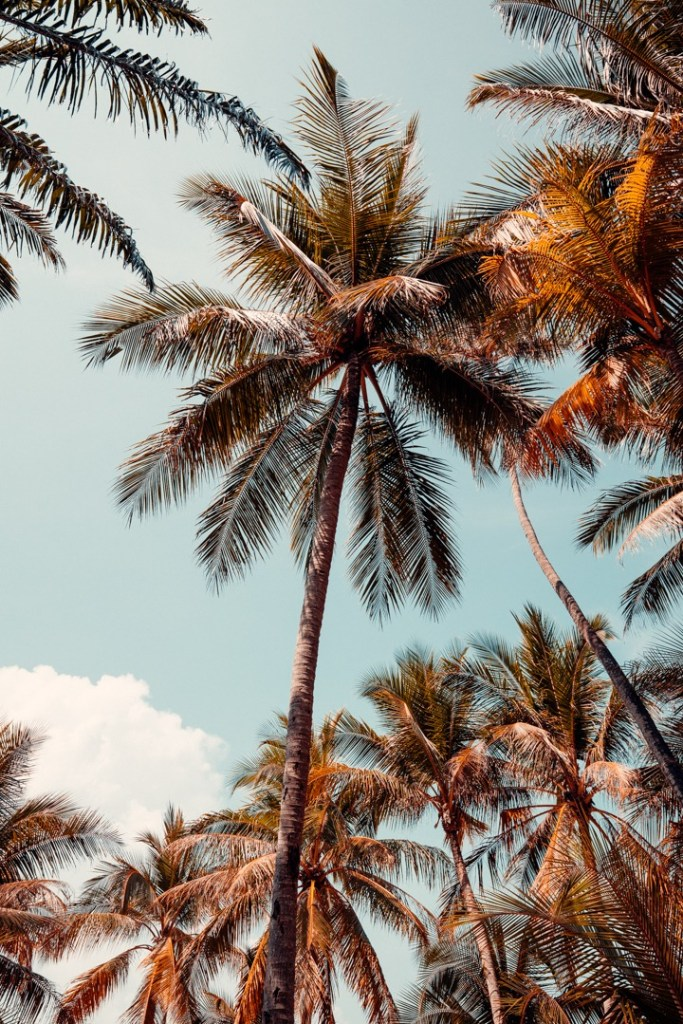 palmier santiburi koh samui
