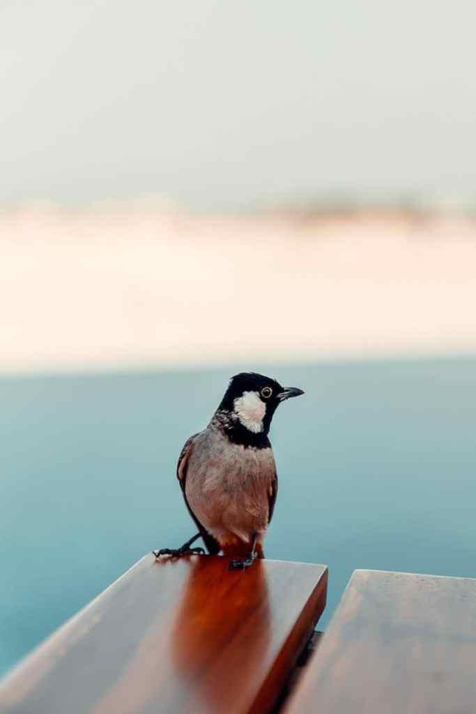 oiseau ras al khaimah