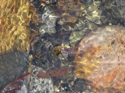 water,stonesweb