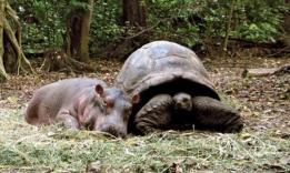 0293d-hipopotamoytortuga