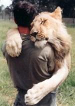 lionhug