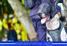 Furst, el agente canino, regresa a la zona del desastre