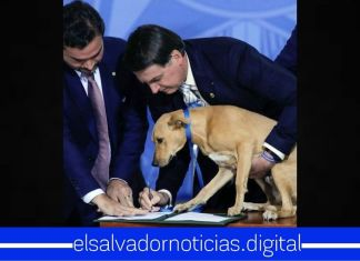 Presidente de Brasil, Jair Bolsonaro sube a su perro Néstor al escritorio para ser testigo de la firma que aumenta pena por maltrato animal