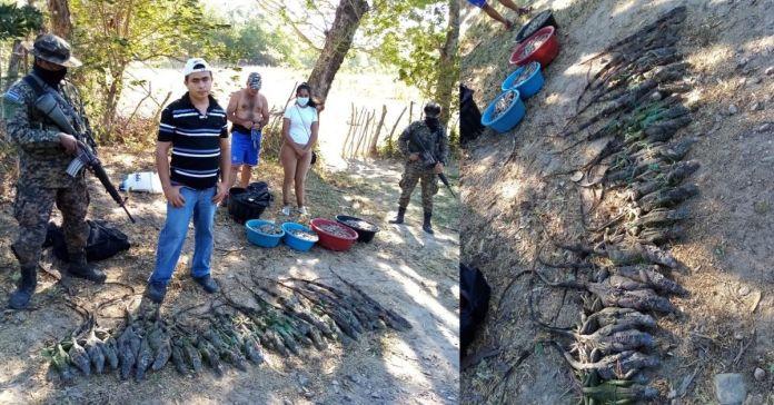 Autoridades capturan a cuatro hondureños que de manera ilegal trataron de ingresar fauna silvestre a El Salvador