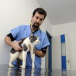 Los controles veterinarios son imprescindibles