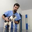 Los controles veterinarios son imprescindibles