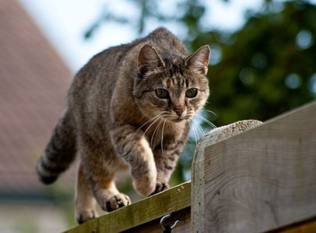 Cats Play Flighting Video