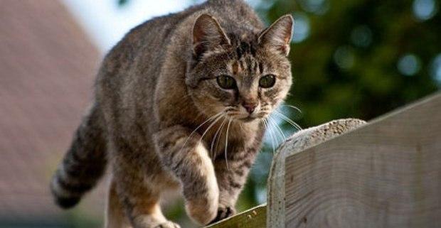 El gato y sus territorios-Feliway