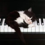 Gatete en teclado de piano